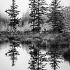 79  G Cape D Reflection Trees BW V