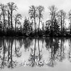 16  G Tree Reflections BW