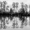 16  G Tree Reflections BW