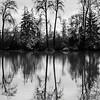 13  G Tree Reflections V