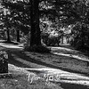 124   G Oysterville Cemetery BW
