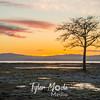 54  G Oysterville Sunrise Tree
