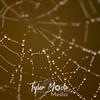 58  G Dew on Spiderweb