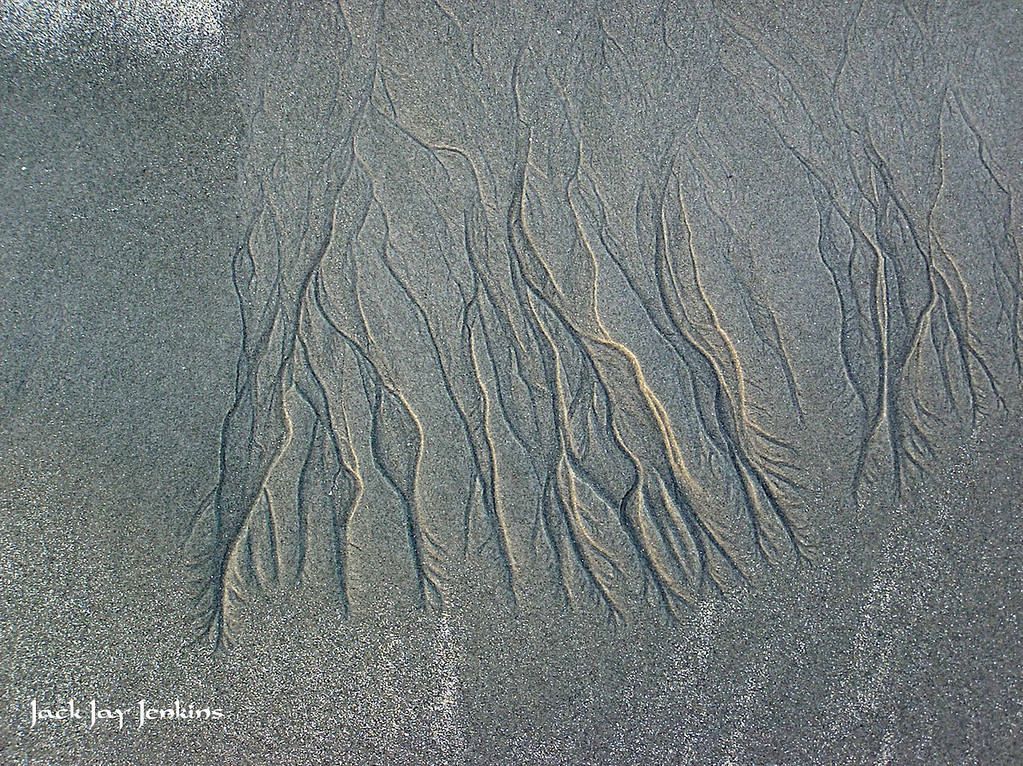 Delicate lines carved in the sand.