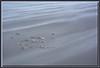 Gräser am Strand bei starkem Wind