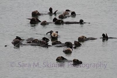 Otter Meeting