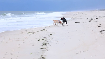 An afternoon with the dogs at Pike's Beach.