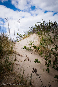 Beach Grass 3. Watch Hill, Rhode Island.