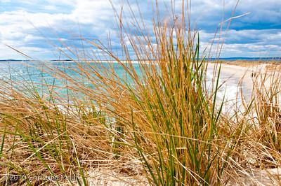 Beach Grass 1. Watch Hill, Rhode Island.