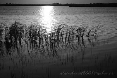 Fin du jour sur le marais