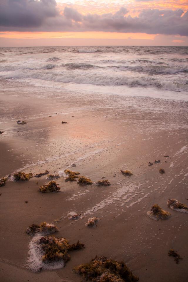 Seaweed Sunrise
