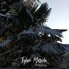 200  G Snowy Palm