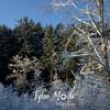 206  G Snowy Branches