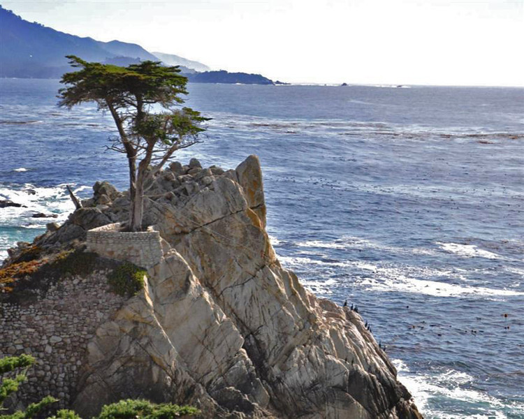The Lone Cypress (Custom)