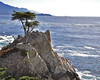 The Lone Cypress (Custom)