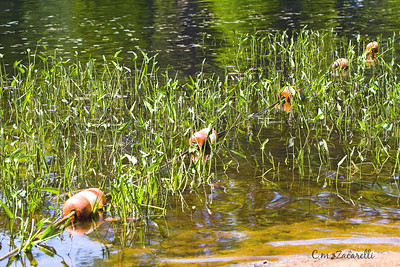 Chattfield hollow, chatfield hollow, lilly pads, lake, pond, water, grass, grasses, State park, CT. fun, summer, bouy, rope, roped off, swim