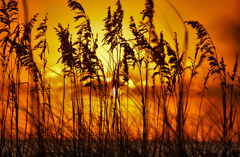 Sunrise in Kill Devil Hills, NC through sea oats.