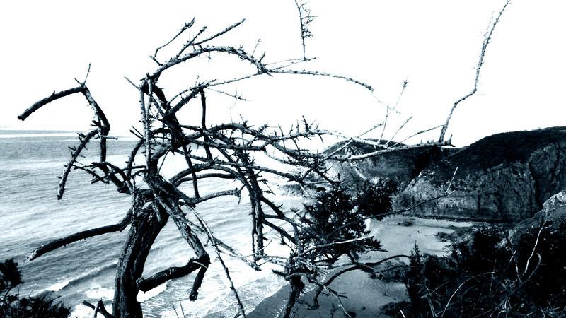 Crazy tree near Plemont beach