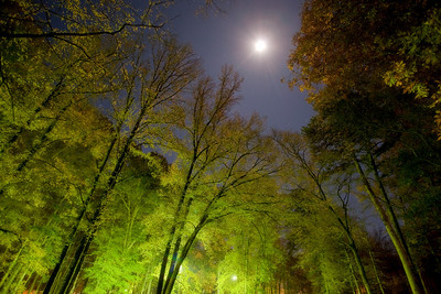 Night shot at Beaver's Bend State Park. A full moon and clear skies along with an abundance of artificial lighting and long exposures produce some interesting nightscapes. This one is one of my favorites.