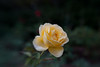1111_Bellingrath Gardens_0005