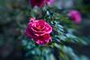 1111_Bellingrath Gardens_0009