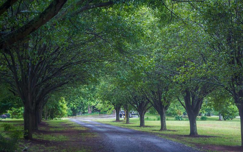 Nana & Papa's Driveway