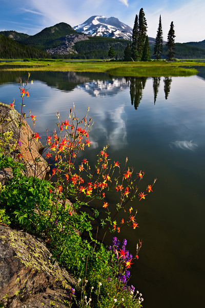 """Summer Wildflowers at Sparks Lake"""