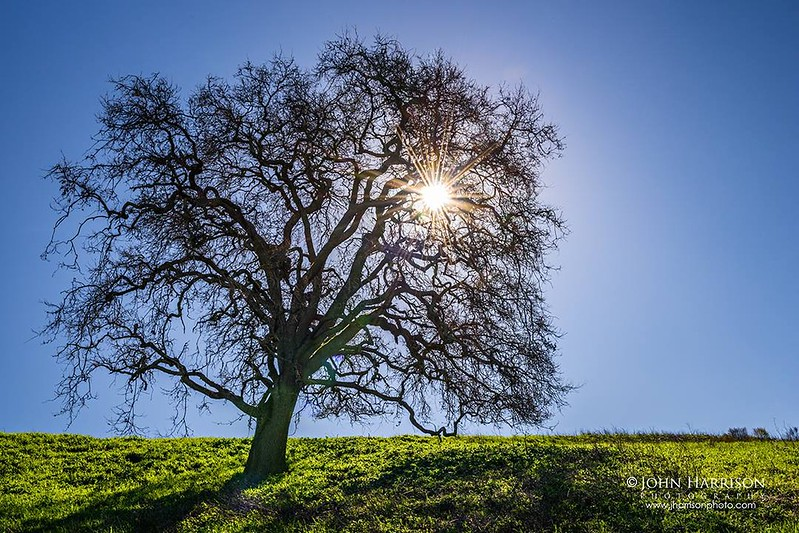 """""""Spring Oaks and Blues Skies in California"""""""