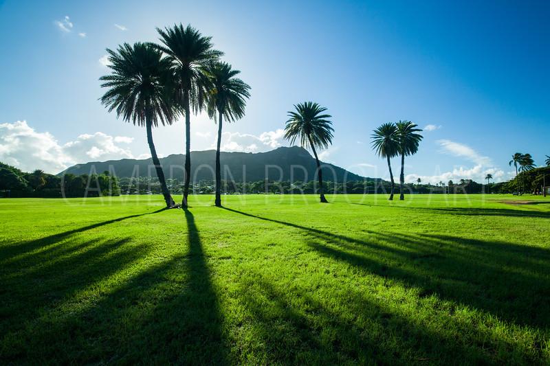 Kapiolani Park Treeline