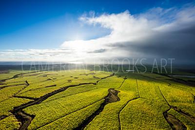 Maui Sugar Cane Fields