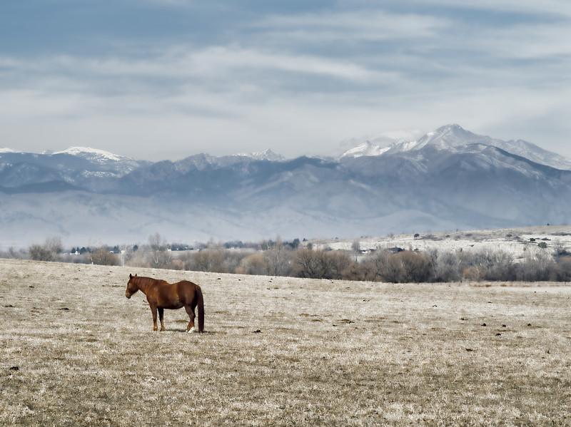 Horse Eye View of Longs Peak