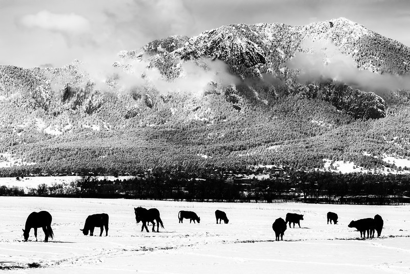 Grazing Under the Flatirons