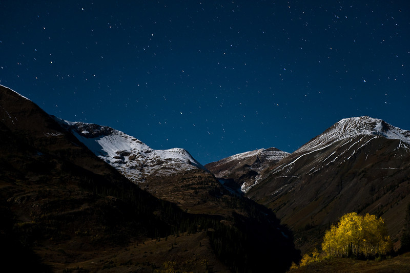 The last stand of aspens. Moonlight on Paradise Divide.