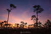 Saw palmetto sunset