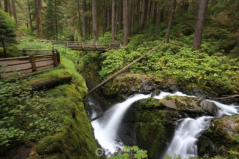Waterfall at Olympic National Park