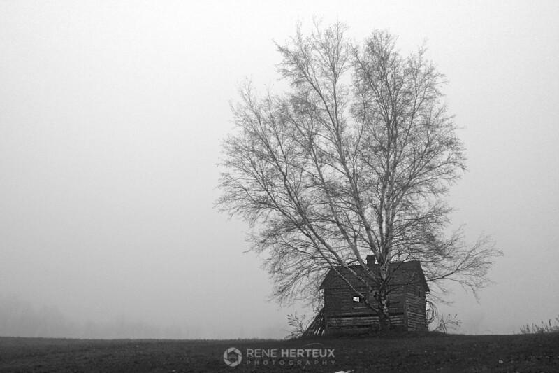 Foggy shed