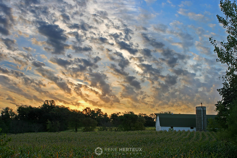 Corn field sunrise, Shakopee MN
