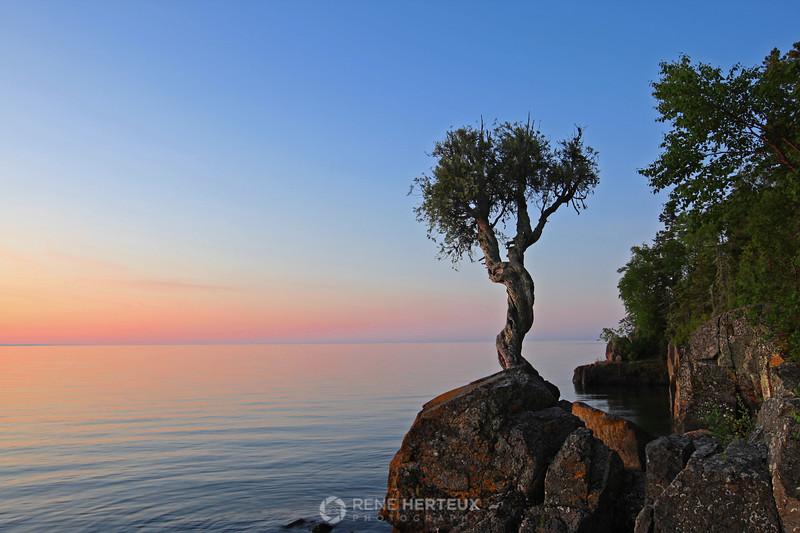 Little spirit cedar tree (aka Witch Tree)