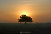 Sunrise over tree in fog