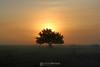 Sunrise over tree in fog