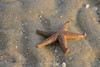 Starfish in sunrise