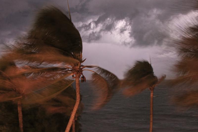 Palm trees bending in the storm, Marathon FL