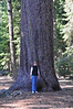 DSC_3858 Darcy with giant Sugar Pine in Trinity Wilderness