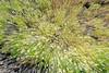 Daisies. Round Top Loop Trail, Sibley Park.