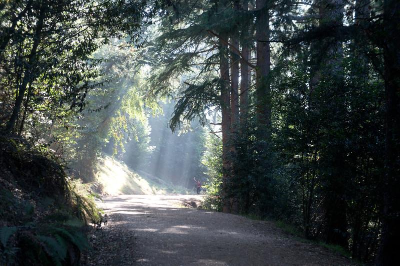 Lower Fire Trail, Berkeley