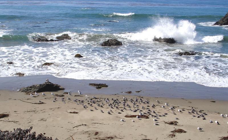 Cental California Coast