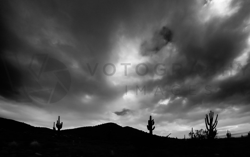 Arizona Desert in Black and White, Sonoran Desert, Arizona