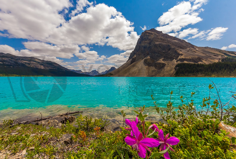 Beautiful Bow Lake, Alberta, Canada