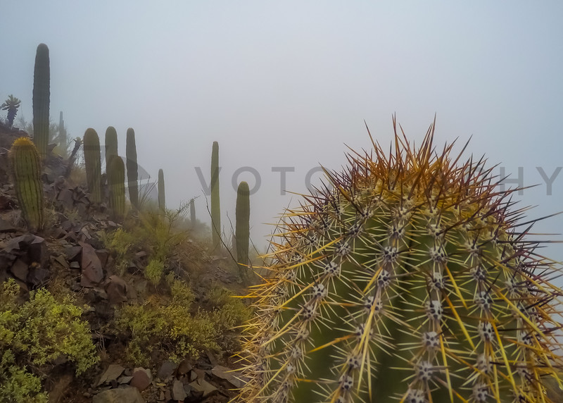 Foggy Winter Morning in the Arizona Desert