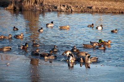 Bethany Lakes Park - Ice Pond